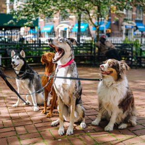 Granule pre psov - veľké a MAXI plemená