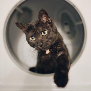 Granule pre dospelé mačky
