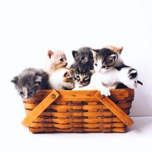 Granule pre mačiatka