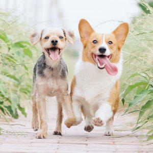 Granule pre psov - malé plemená